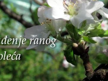 proleće-prokuplje-video